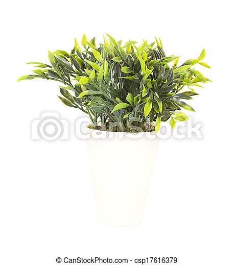 Decorative plant in the pot isolated on white background - csp17616379