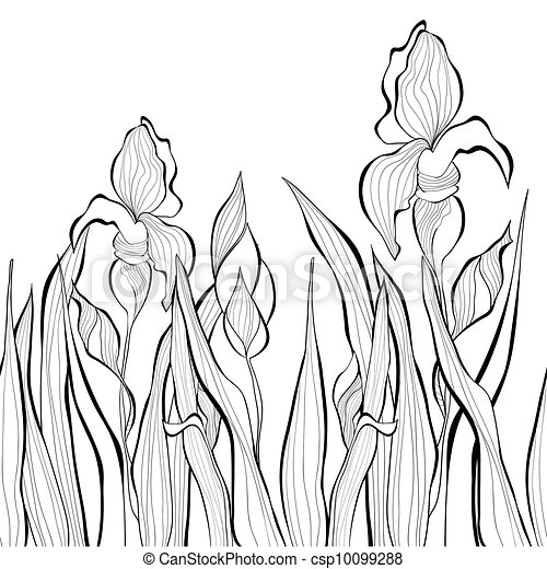 Decorative seamless border with Iris flowers - csp10099288