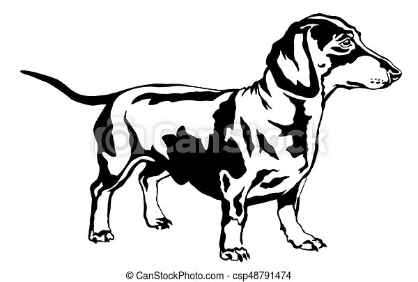 Decorative Standing Portrait Of Dog Dachshund Vector Illustration