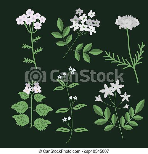 decorativo, flores, conjunto - csp40545007