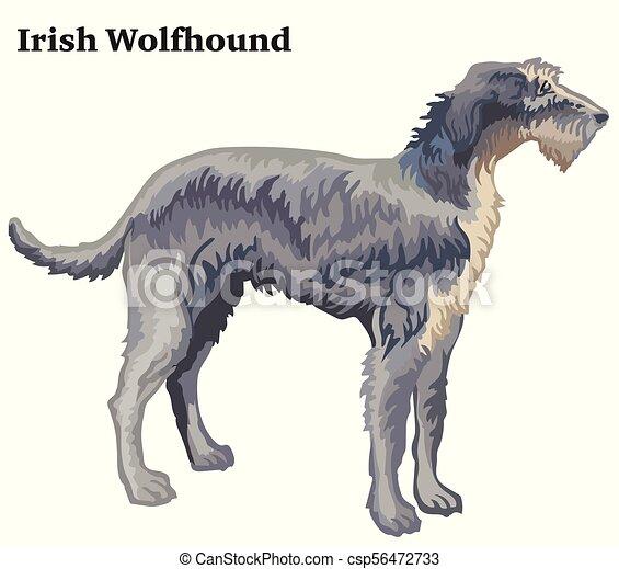 Decorativo Posición Irlandés Coloreado Perro Lobo Ilustración