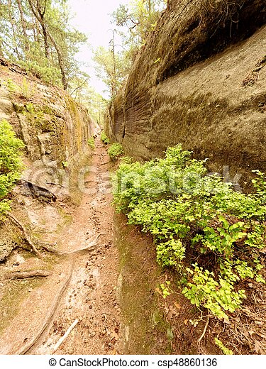 Deep entrance path in sandstone block. Historical path through forest - csp48860136