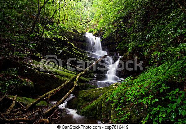 Deep forest Waterfall - csp7816419