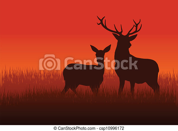 Deer and Doe - csp10996172