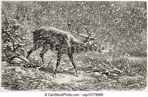 Deer - csp10779996