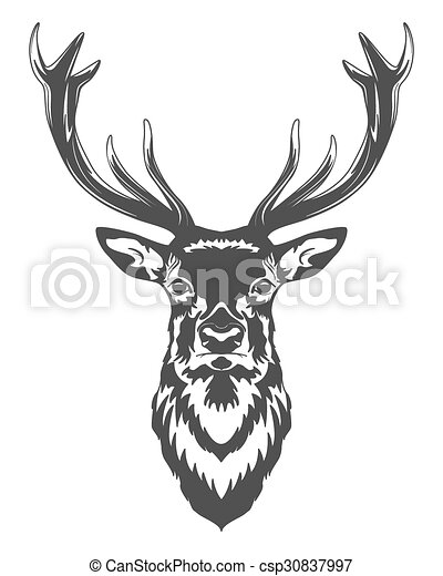 Deer head  - csp30837997