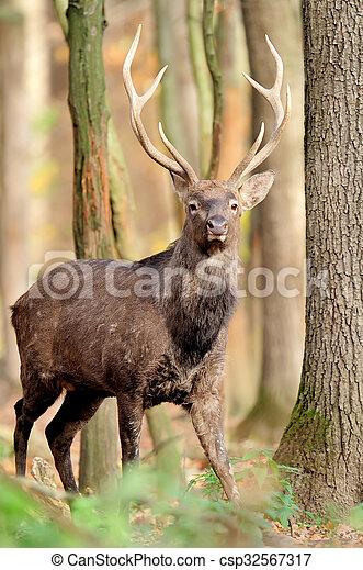 Deer in autumn forest - csp32567317