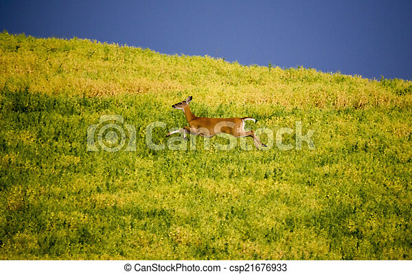 Deer in Farmers Field - csp21676933