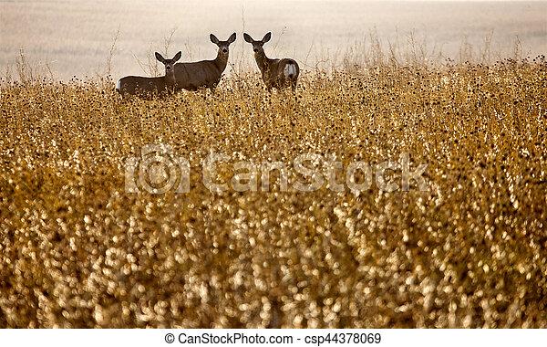 Deer in Field - csp44378069