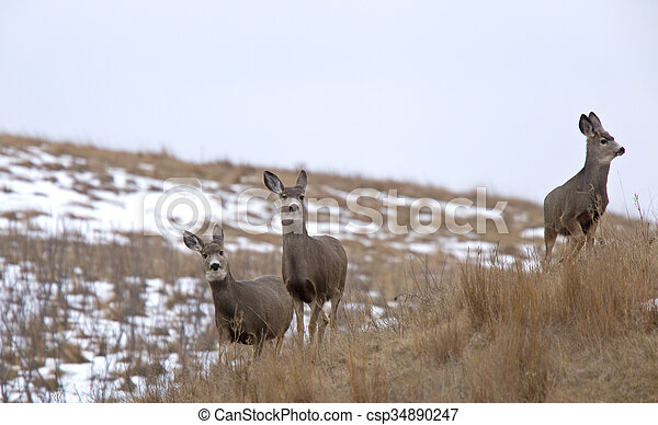 Deer in Field - csp34890247