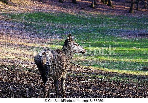 deer in forest - csp18456259