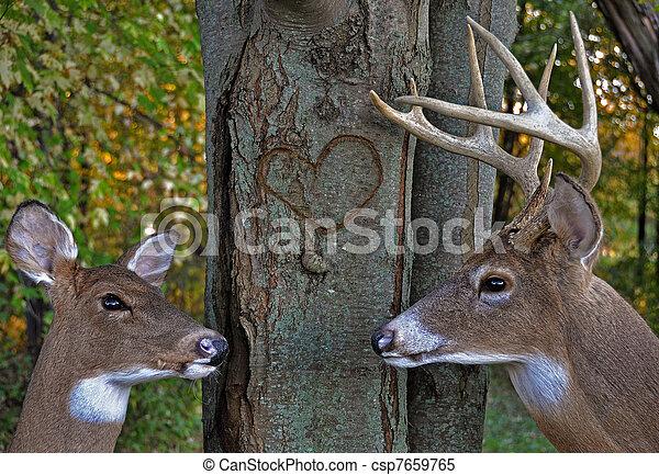 deer in woods - csp7659765