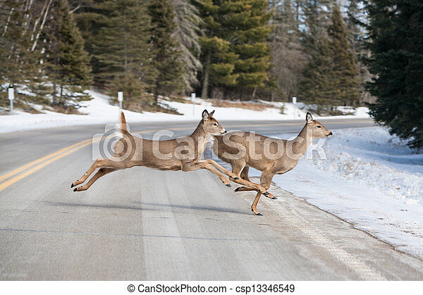Deer Jumping - csp13346549