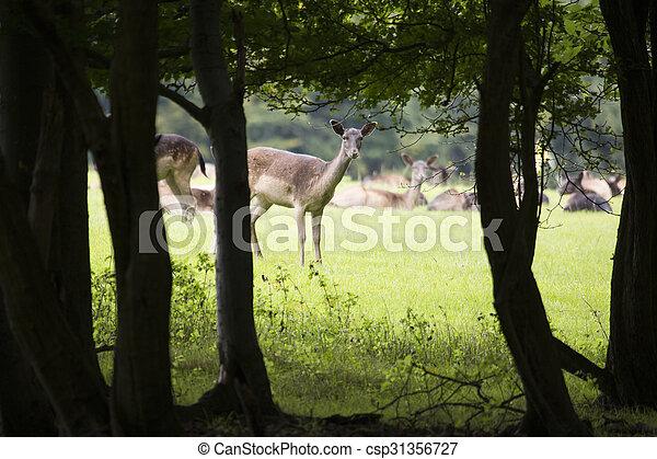 Deer keeping an eye out for danger - csp31356727