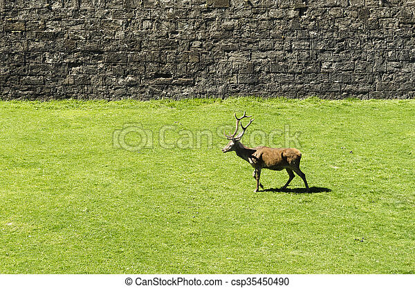 Deer park - csp35450490