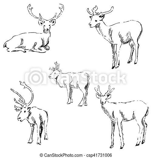 Deer sketch. Pencil drawing by hand - csp41731006