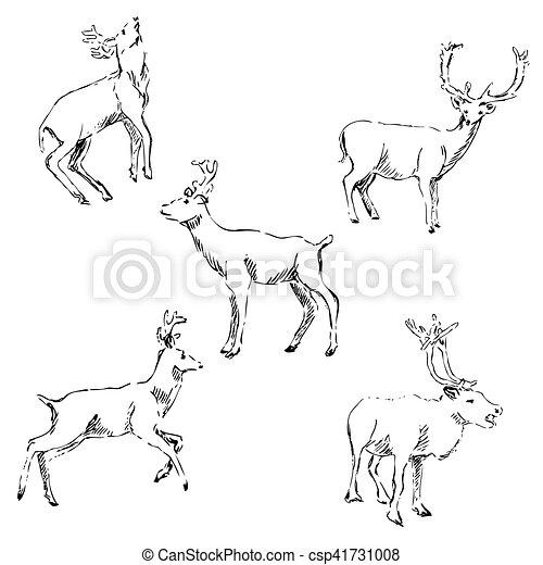 Deer sketch. Pencil drawing by hand - csp41731008