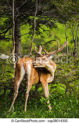 Deer stag at the lake in mountains - csp38014305