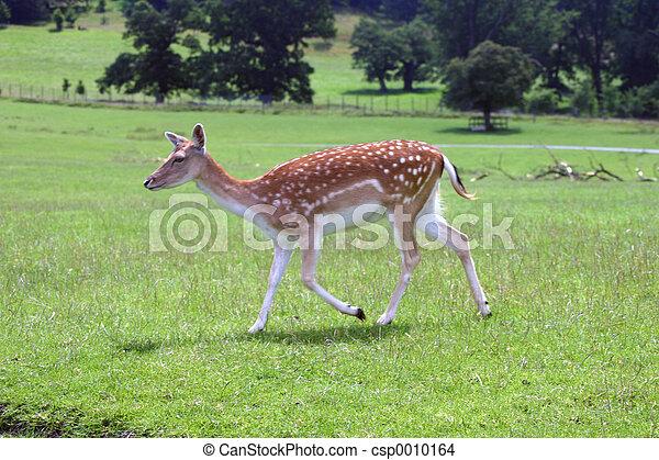 deer - csp0010164