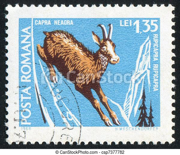 deer - csp7377782