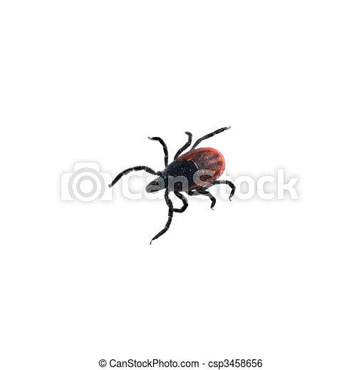 Deer TIck - Ixodes scapularis - csp3458656