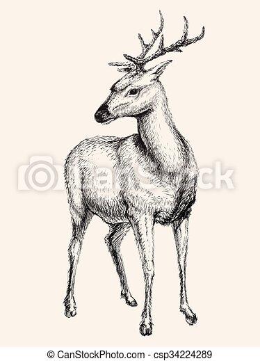 Deer vector illustration, hand drawn, sketch - csp34224289