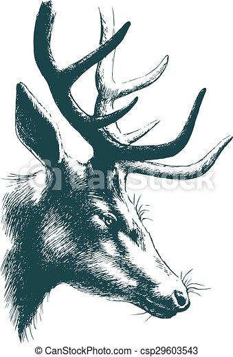 Deer vector sketch - csp29603543