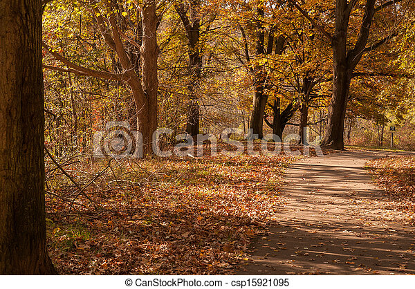Deers in the Forest in Fall - csp15921095