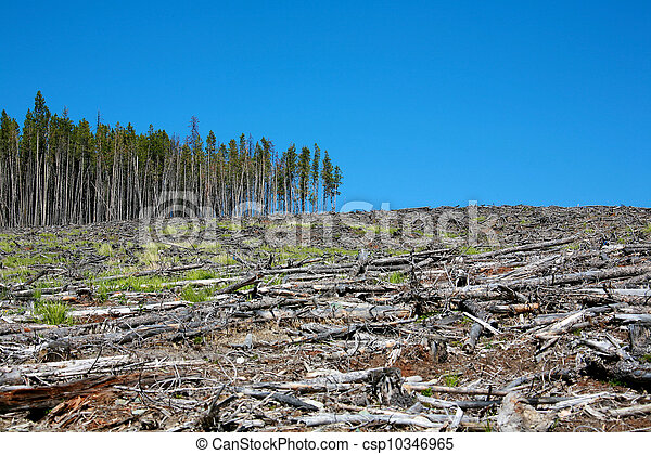 deforestation - csp10346965