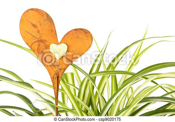Dekoration Herz Pflanze Spinne Herz Pflanze Aus