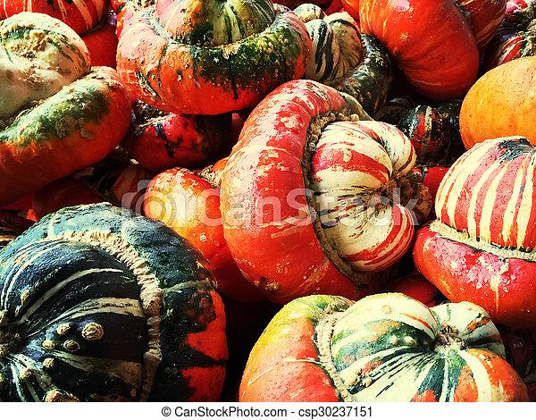 dekorativ, färgrik, turban, squashes - csp30237151