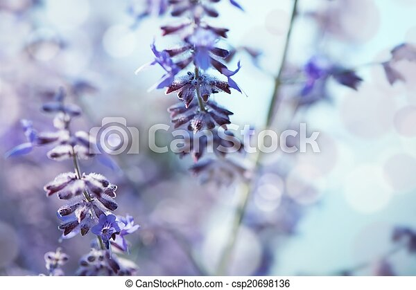 Delicate background with lavender - shallow depth of field - csp20698136