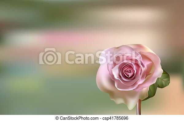 Delicate pink Rose on a blurred green background - csp41785696