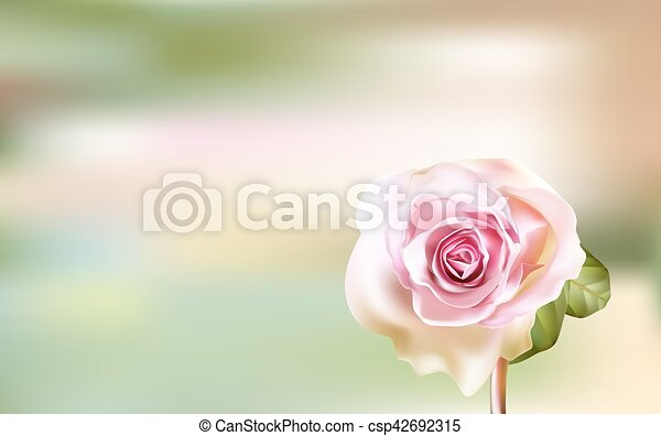 Delicate pink Rose on a blurred green background - csp42692315