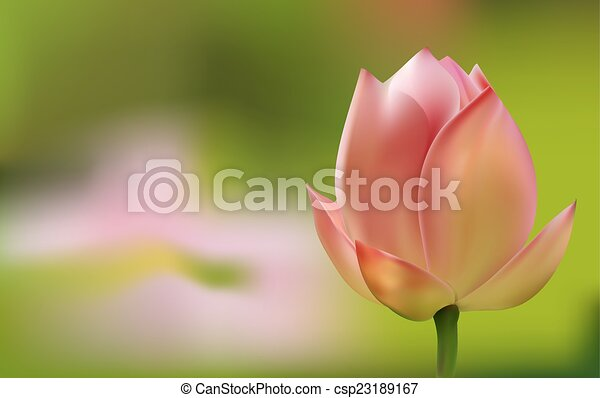 Delicate pink Tulip on green background - csp23189167