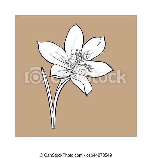 Delicate Single Crocus Spring Flower With Stem And Leaf Vector