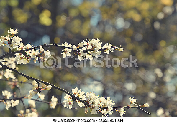 Beautiful Delicate Spring Twig Of A Fruit Tree Showered With Small