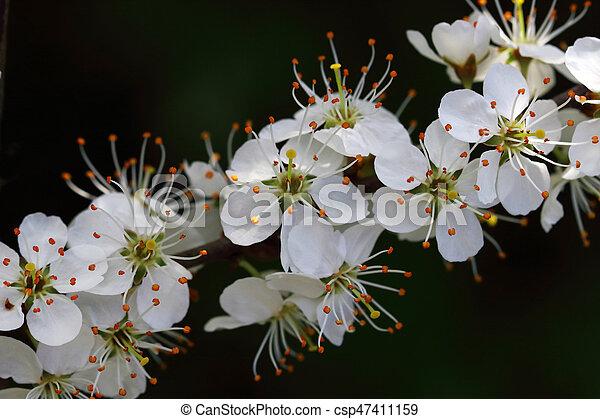 Delicate white flowering bushes beautiful flowering shrubs stock delicate white flowering bushes csp47411159 mightylinksfo
