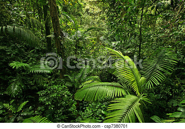 Dense Rain Forest Jungle - csp7380701