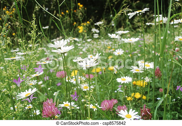 Image result for meadow of daisies, dandelions and clover