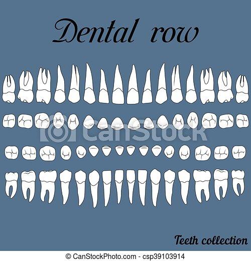 dentaire, rang, dents - csp39103914