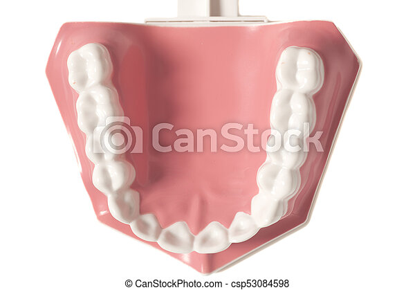 Dental Human Teeth Model Isolated On A White Background Stock