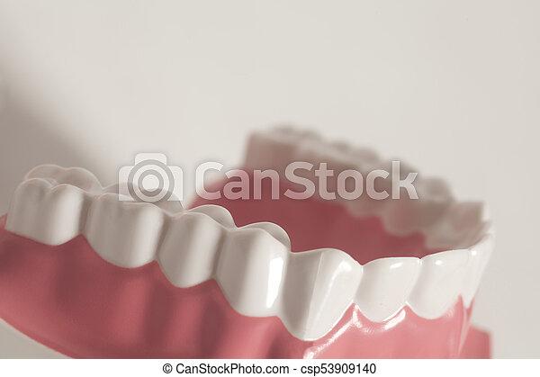 Dental, modelo, dientes humanos. Plano de fondo, dental, dientes ...