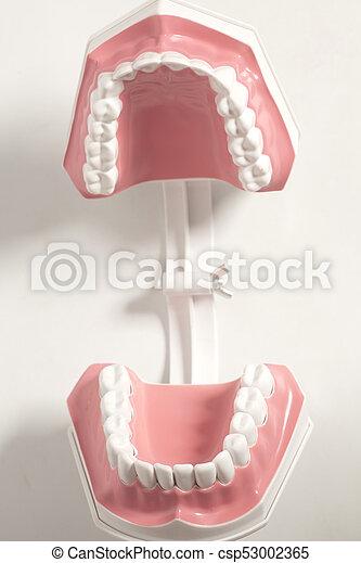 Dental, modelo, dientes humanos. Dental, fondo., dientes... imagen ...
