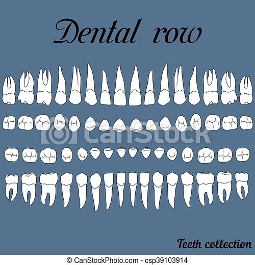 dental row teeth - csp39103914