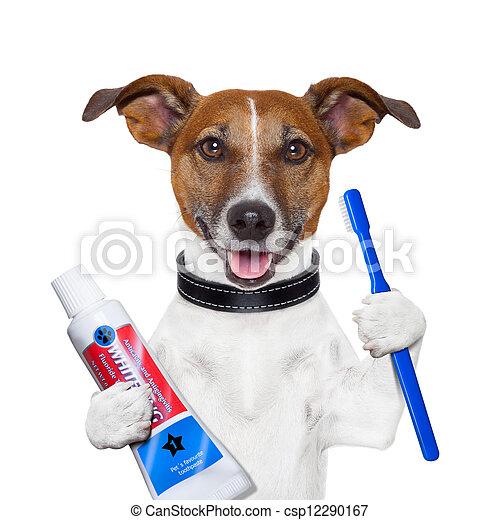 dentes, cão, limpeza - csp12290167