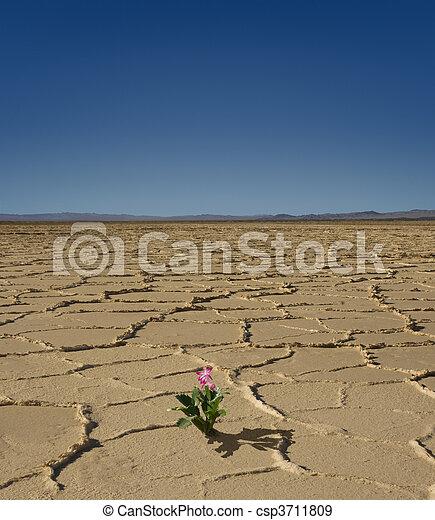 Desert Bloom - csp3711809