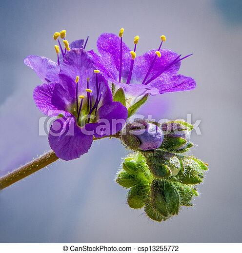 Desert Flower 4 A Beautiful Purple Wildflower Captured In The