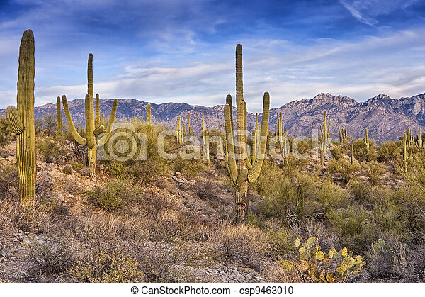 Desert Scene in Tucson Arizona - csp9463010