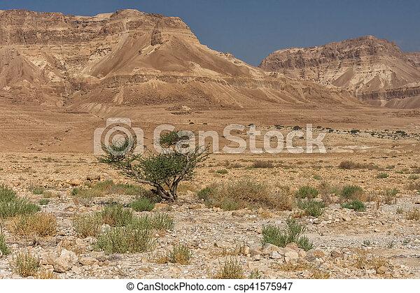Desert - csp41575947